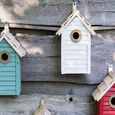 Zubehör für Vögel